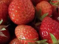 Strawberry fields forever…