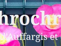 lachrochro.fr